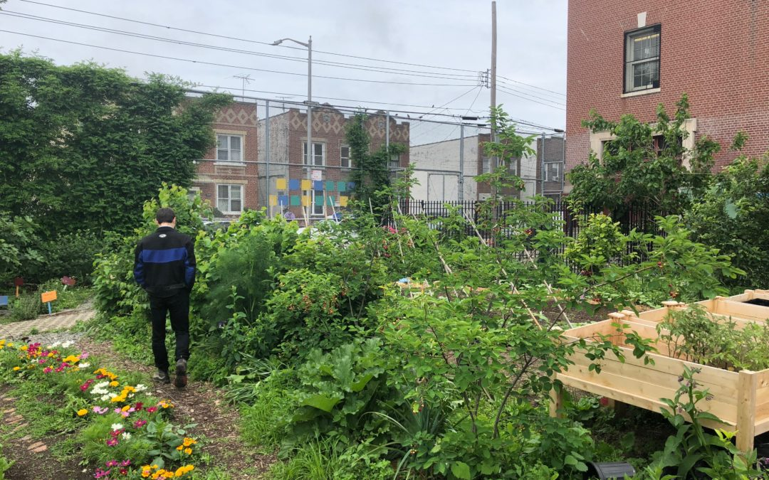 Learn more about HOW designees DC Central Kitchen, Common Threads, and Edible Schoolyard NYC